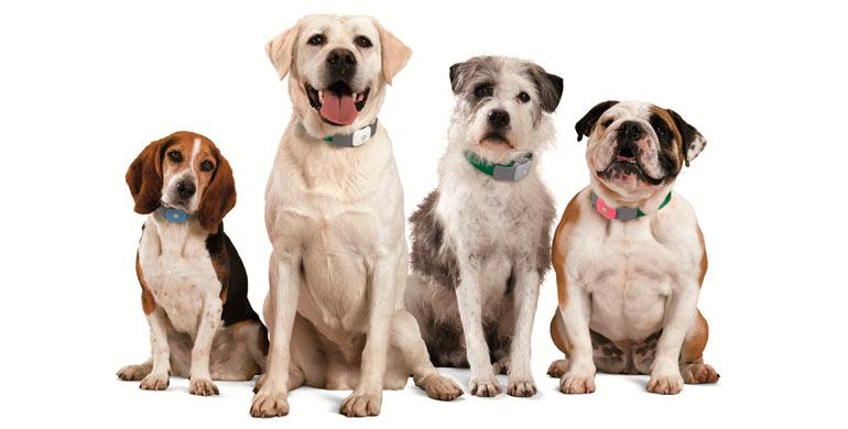nombres-para-perros-hembras
