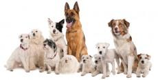 Nombres para perros machos