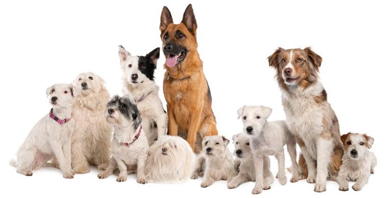 nombres-para-perros-machos