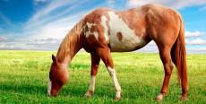 Nutrición del caballo