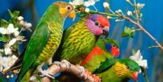 Alojar a tus pájaros exóticos
