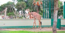 Parque de las Leyendas en Lima