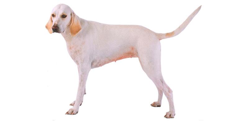 perro-billy