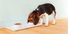 ¿Por qué come menos mi perro en verano?