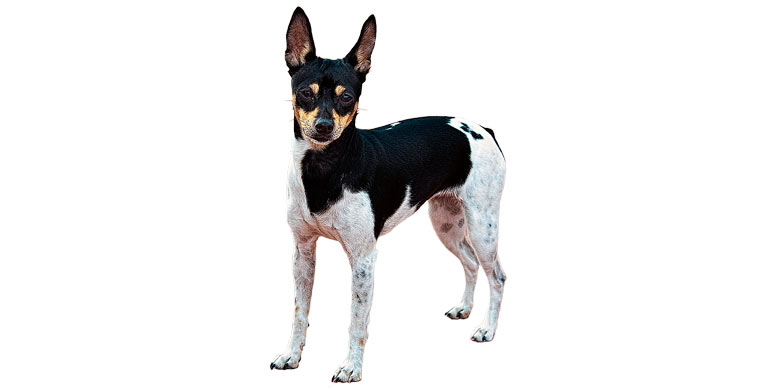 perro-gos-rater-valencia