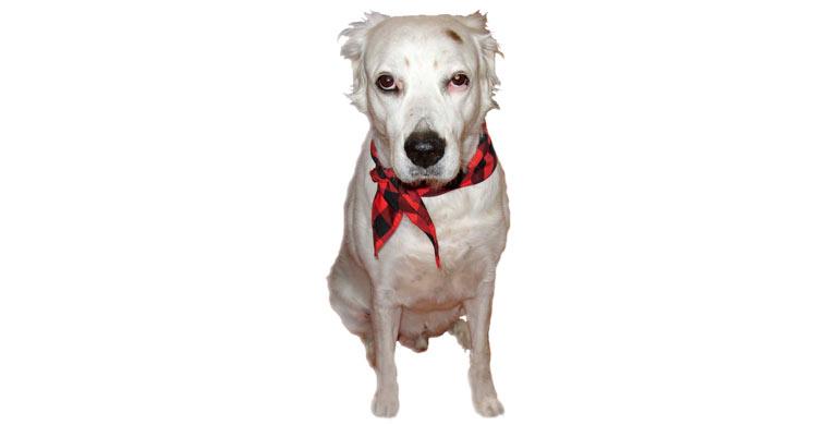 perro-mestizo-gigante