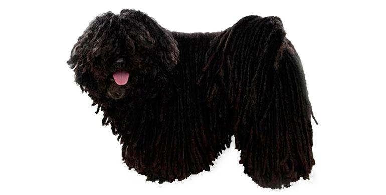 perro-puli