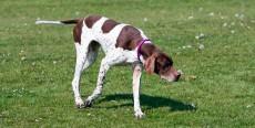Las 10 razas de perros más deportistas
