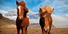 Piense como su caballo