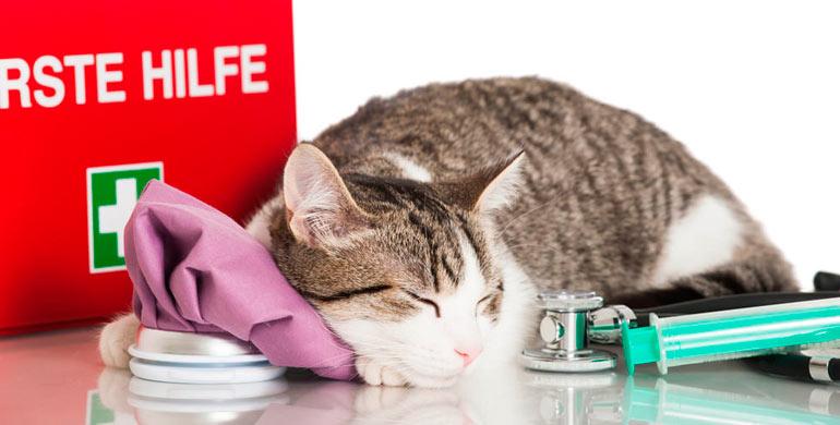 primeros-auxilios-para-gatos