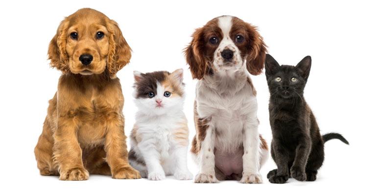 problema-de-comportamiento-perros-y-gatos