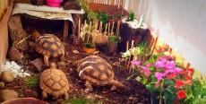 Cómo diseñar un terrario para tortugas