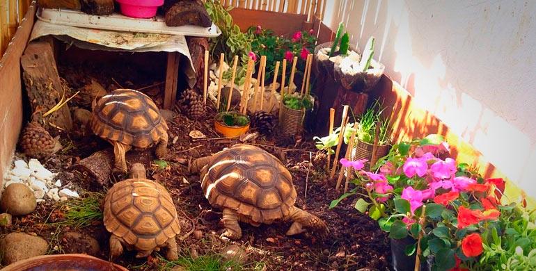 C mo dise ar un terrario para tortugas iper - Como construir un terrario ...