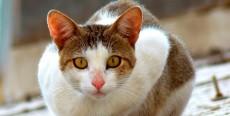 Los trastornos en los gatos relacionados con la edad