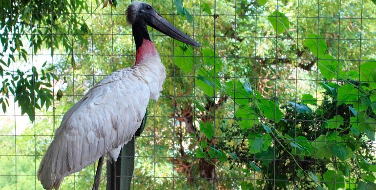 Zoológico de Huancayo