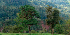 El Bosque Tsho'llet