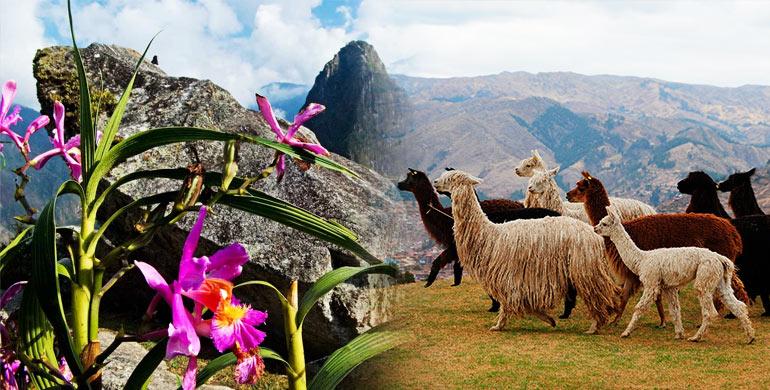 Flora y Fauna de Cusco