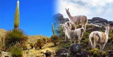 Flora y Fauna de Huancavelica