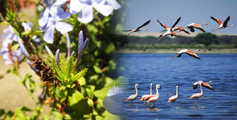 Flora Y Fauna Del Perú: Flora Y Fauna De Ica, Gran Cantidad De Biodiversidad En