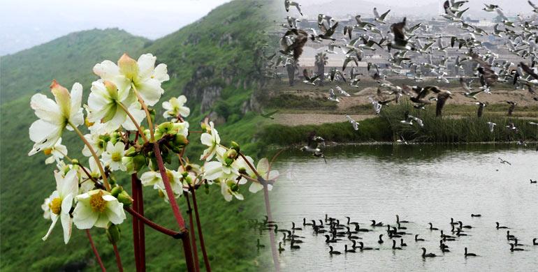Flora y Fauna de Lima