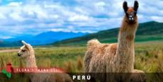 Flora y Fauna de Ucayali