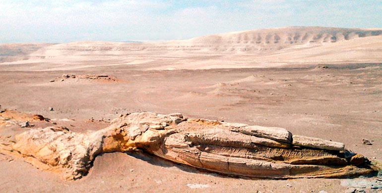fosiles-de-ocucaje