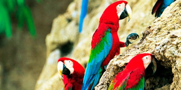fotogaleria-reserva-nacional-manu-1