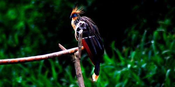 fotogaleria-reserva-nacional-manu-3