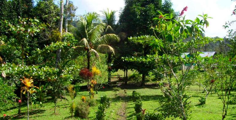Jard n bot nico el perezoso iper for Casa jardin botanico