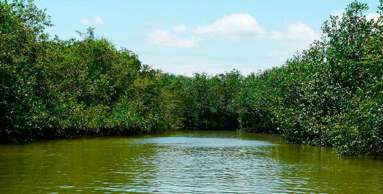 santuario-nacional-manglares-de-tumbes