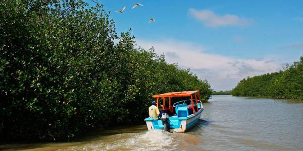 fotogalerias-manglares-de-tumbes-1