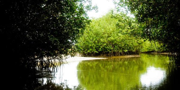 fotogalerias-manglares-de-tumbes-2