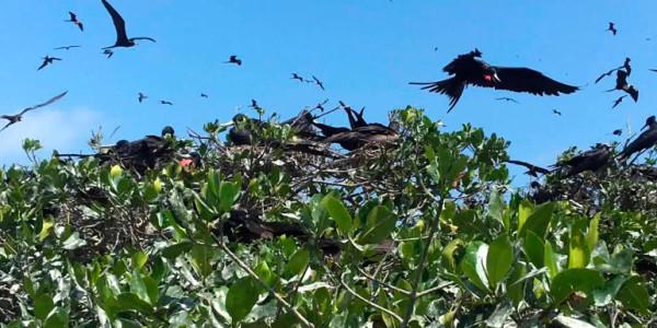 fotogalerias-manglares-de-tumbes-5
