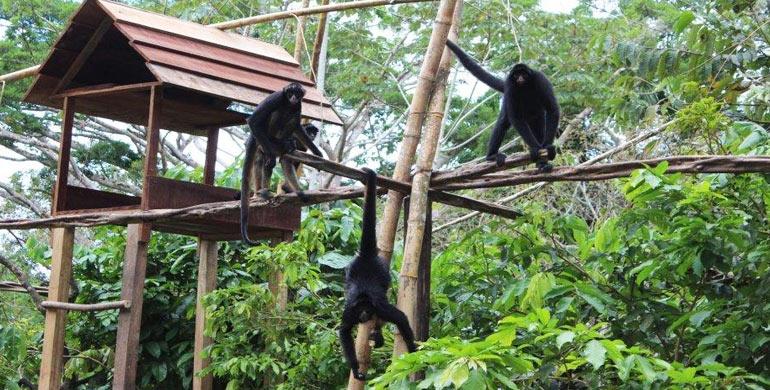 Zoológico de Quistococha