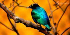 Leyenda el pájaro malo
