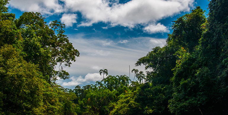 Parque Nacional Alto Purús