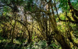 Ampay, el bosque de intimpas