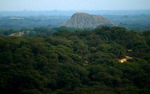 Bosque de Pómac, la magia de un bosque milenario