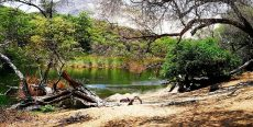 Bosque Natural El Cañoncillo