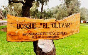 Monumento Nacional Bosque El Olivar